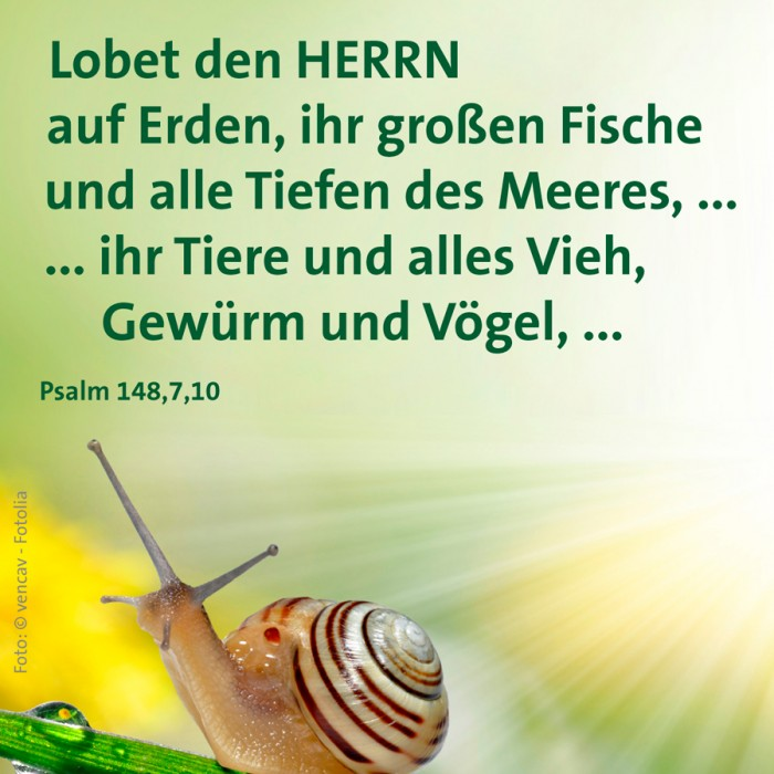 17_Schoepfung_Ps_148_7_10