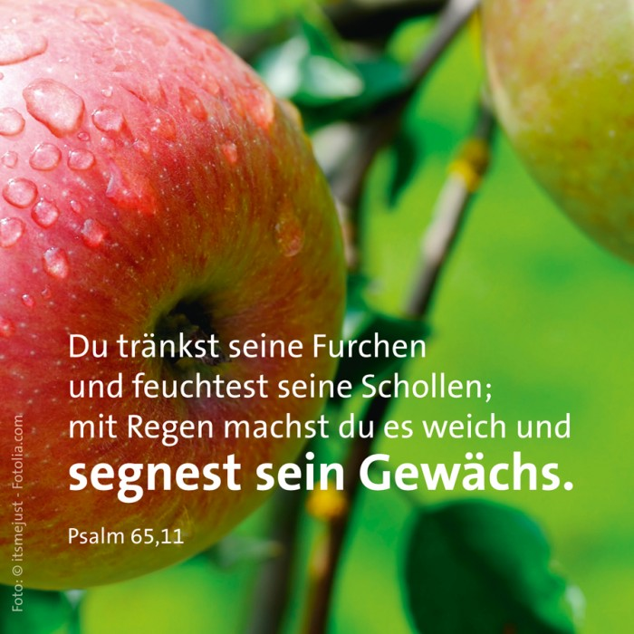 17_Schoepfung_Ps_65_11