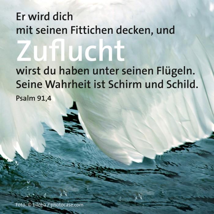 23_Schutz_Psalm_91_4